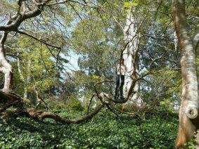 leeza tree